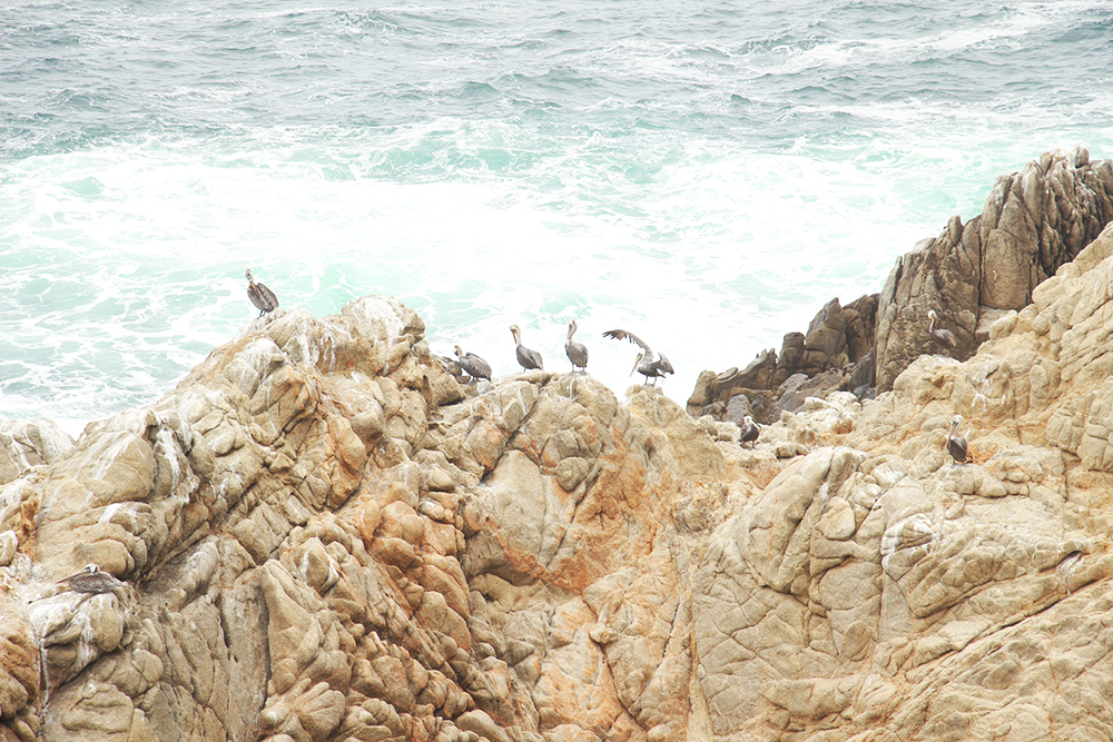 blog-todaywillbegreat-bigsur02